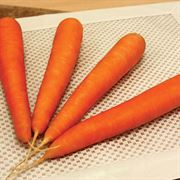 Fuerte Hybrid Carrot Seeds