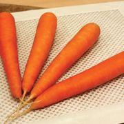 Fuerte Hybrid Carrot Seeds image