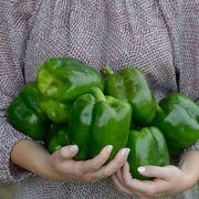 Park's Whopper II Hybrid Bell Pepper Seeds (P)Pkt of 15 seeds Alternate Image 3