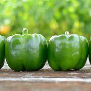 Park's Whopper II Hybrid Bell Pepper Seeds (P)Pkt of 15 seeds Alternate Image 6
