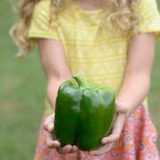 Park's Whopper II Hybrid Bell Pepper Seeds (P)Pkt of 15 seeds Alternate Image 7