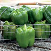 Parks Whopper II Hybrid Bell Pepper Seeds