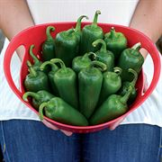 Parks Whopper Jalapeno Pepper Seeds