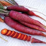 Dragon Purple Carrot Seeds image