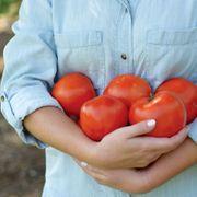 Park's Legacy Tomato Seeds Alternate Image 3