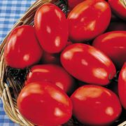 San Marzano Organic Tomato Seeds image