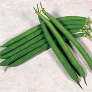 Desperado Bush Bean Seeds (M)1/4lb image