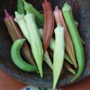 Rainbow Fiesta Okra Seeds image