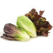 Park's Organic Tricolor Romaine Blend Seeds image