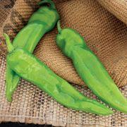 Desperado Hybrid Pepper Seeds Alternate Image 1