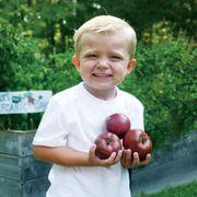 Purple Boy Hybrid Tomato Seeds Alternate Image 1