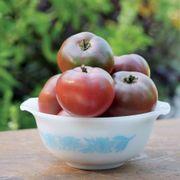 Purple Boy Hybrid Tomato Seeds Alternate Image 3