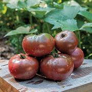 Purple Boy Hybrid Tomato Seeds image