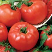 Tomato Chef's Choice Red Hybrid image