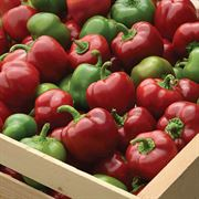 Pepper Snackabelle Red Seeds Alternate Image 1