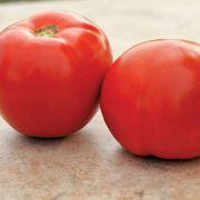 Roadster Hybrid Tomato Seeds Thumb