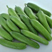 Green Light F1 Cucumber Seeds Thumb