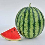 Watermelon Mambo Hybrid image