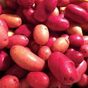 Clancy F1 Pelleted Potato Seeds Thumb