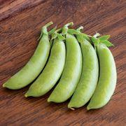 Organic Pea Cascadia