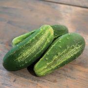 Excelsior Organic Cucumber Seeds Alternate Image 1
