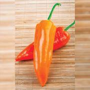 Oranos Organic Pepper Seeds Thumb