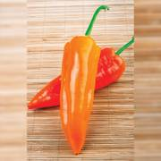 Organic Pepper Oranos F1 image