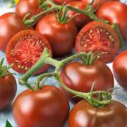 Tomato Early Choice Black Hybrid