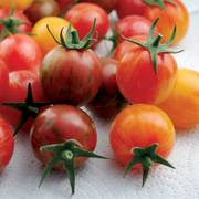 Artisan - Bumble Bee Mix Organic Cherry Tomato Seeds Thumb