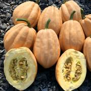 Winter Squash Baked Potato Seeds image