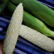 Illusion (white) Sweet Corn Seeds Thumb
