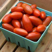 Tomato Marzito Seeds Thumb