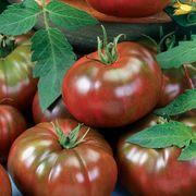 Chef's Choice Black Tomato Seeds Thumb