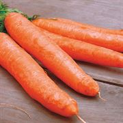 Carrot Little Finger Organic Seeds image
