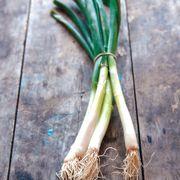 Parade Green Onion Organic Seeds Thumb