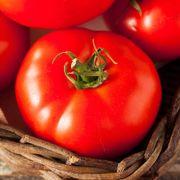 Tomato Fireworks Organic Seeds image