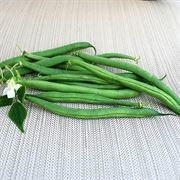 Derby Green Organic Bush Bean Seeds image