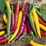 Cayenne Blend Organic Pepper Seeds