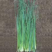 Nelly Organic Chive Seeds Thumb