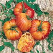 Big Rainbow Tomato Seeds