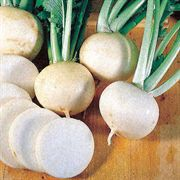 White Lady Hybrid Turnip Seeds