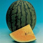 New Queen Hybrid Watermelon Seeds