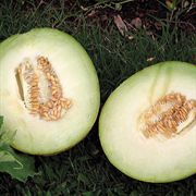 Courier Hybrid Galia Melon Seeds