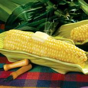Legend Hybrid Corn Seeds