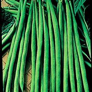 Maxibel Bush Bean Seeds Alternate Image 1