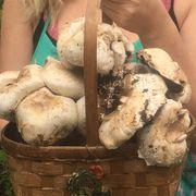 Mushroom Button Kit-6 lbs Alternate Image 1