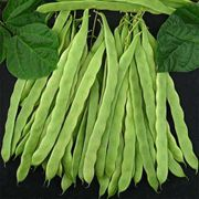 Algarve French Pole Bean Seeds image