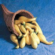 Horn of Plenty Hybrid Squash Seeds
