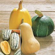 Harvest Blend Organic Winter Squash Seeds