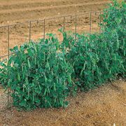 14 Foot Pea Fence